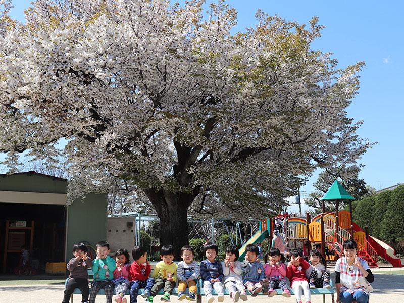 桜の下で集合写真